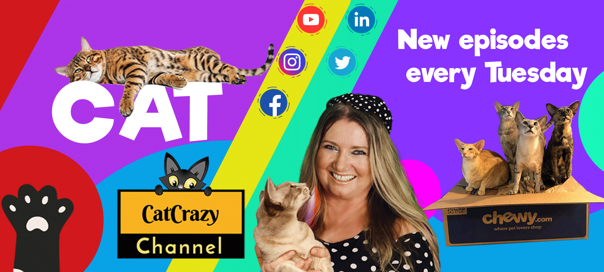 CatCrazy Channel